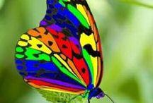 Rainboworld
