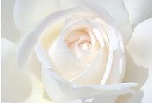 WHITE Romance / by Anthony Glam