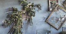 Botany / Plants, flowers, tantalizing botanicals for garden daydreams.