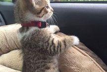 Kitten Cuddles / What's not to love about kitten cuddles?