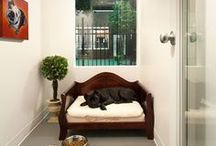Luxury Pet Life / Sometimes pets have a more luxury life than us. Their own room? Their own fancy dog shed? Hard to believe.