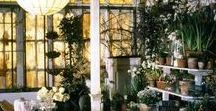 Design & Decor: Conservatory / They conjure up Victorian collectors, ladies with magnifying glasses and watercolors; glass houses filled with exotic plants and cabinets of natural curiosities.