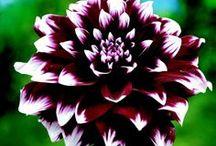 Gorgeous Flowers / by Renee' Haraway