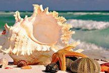 I Love Seashells  / by Renee' Haraway