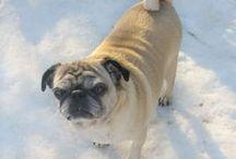 Dog owner advice tips and information / Dog related advice, products, tutorials and information for dog moms.