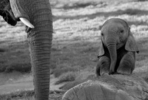 Elephants / by Shauna Causey