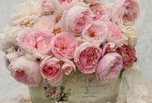 お花と植物