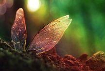 butterfly / by assa T.