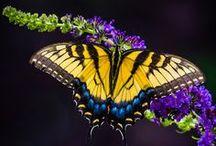 Butterflies & Moths  / by Veronica C.