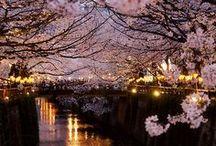 fascinating japan / by Christa Al Buainain