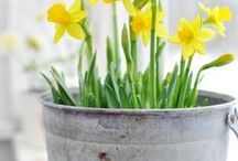 SEASONAL   SPRING / Spring