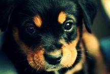 Saroj | Love for Animals / Saroj love for cute & beautiful animals / di Saroj | Made in Italy 2.0