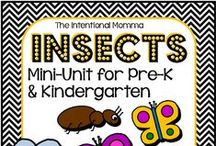 Insects Preschool Theme
