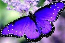 Caterpillars, Butterflies, & Moths