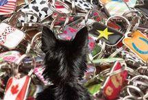 blanket pet ID tags