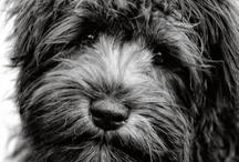 Animals / Cute animal pics to make you smile