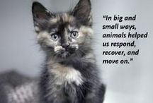 News / by Animal Rescue League of Boston