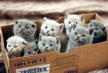 Kitty Kats / by Tina Parks