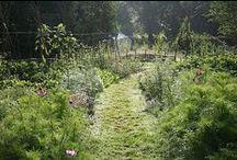 Natural Garden / Ideas and inspiration to create a more natural garden
