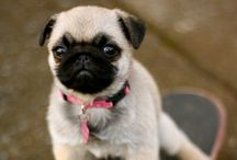 designated for pugs / by Katie McColgan