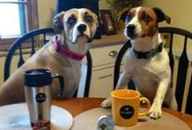 Keurig Loves Pets / Many of us at Keurig are pet lovers and we know our fans are too!