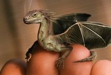 Dragons / Dragons are real... Don't let anyone tell you otherwise...