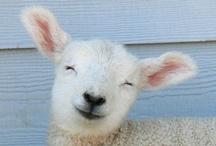 INSPIRATION - Animal welfare