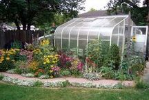 Greenhouses & Cold Frames / by Evelyn Vincent