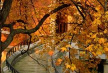 Fall..... / by Kathy Scheenstra