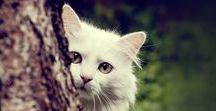 Másenyka / Future white cat