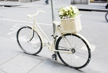 bicyclette / by Erica Cook (Moth Design)