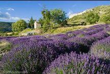 Juste la Drôme en... Violet