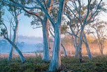 Australia / by Yvonne Fitzell