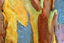 tree bark / by Yvonne Fitzell
