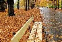 Autumn / by Michelle Mills