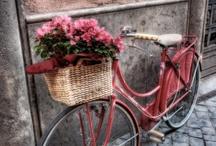 Flower Basket on Bike