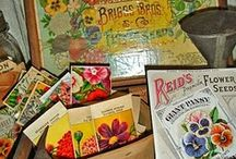 vintage seed packets / by Yvonne Fitzell