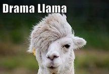 Dont Feed The Drama Llama No Drama Llama.   Scho...