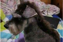 Daisy dog! / by Jennifer Childress