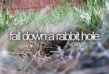 Pinterest > Falling Down a Rabbit Hole / by Anduro Marketing