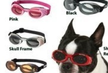 Dog Sunglasses.  / 