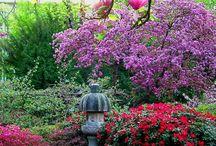 Gardening / by Susan Fletcher Danielson
