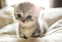 Awwdorable / Daily dose of cuteness / by Amythest Schaber