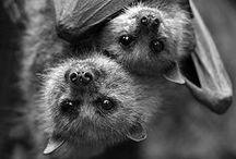 animal cuteness.