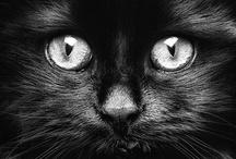 Fur Babies & animal lovies / by Mi'chelle
