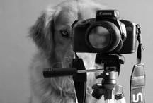 Dog Photos We LOVE