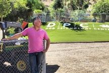 Dog Whisperer Cesar Millan / World renowned dog whisperer, Cesar Millan introduces EasyTurf artificial grass as his turf-of-choice. EasyTurf is the perfect option for his pack and is the perfect option for yours.