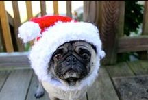Gifts For Arlo & Alice, the Pugs / Since my pugs don't have thumbs, they can't create their own Christmas Wish Lists. I've taken it upon myself to create a joint list for them. We wouldn't want Santa skipping them, would we?