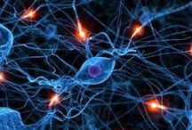 Psychology & Neuroscience / I am a doctor after all!