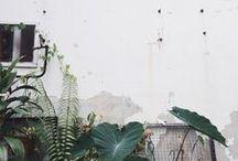 foliage / Houseplants for the urban jungle